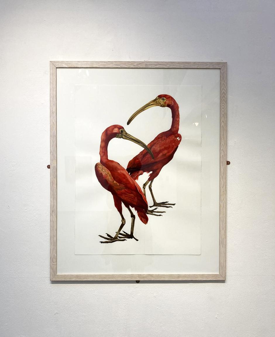 Kathryn Poole Scarlet Ibis